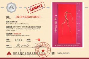 1st Grade 3B Class NGPQSIC Certified Chinese Wild Ginseng